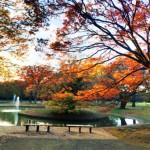 【まとめ】渋谷の飲めるカレー、理想を超えるウニ丼など東京別視点ガイド紹介の名所8選