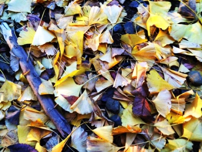 代々木公園の紅葉が綺麗で秋に行っておきたい