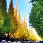 ドラマ撮影でも使われる名所「神宮外苑のイチョウ並木」には今秋ぜひとも行っておきたい!お祭りも開催中