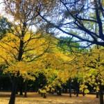 代々木公園の紅葉が綺麗だった!もうすぐ見頃なので今週末に出かけてみよう