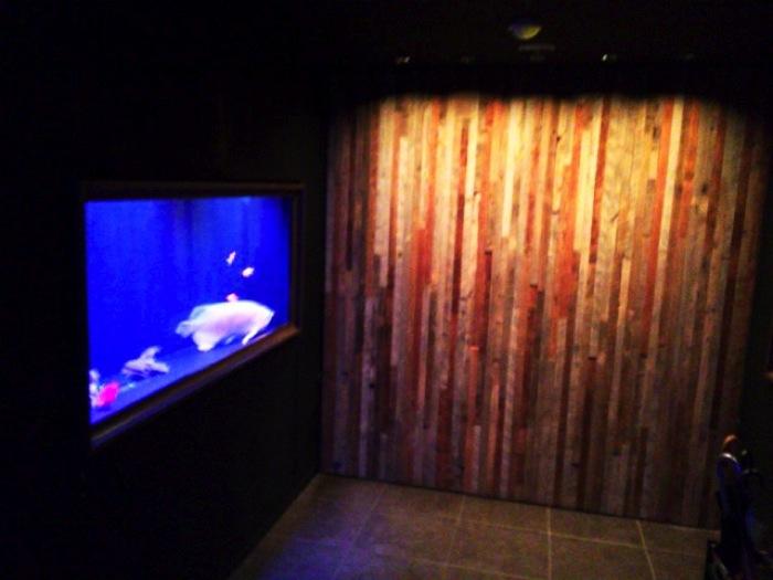 【新宿】グータンヌーボで話題の「LIME」ブログータンで突撃か?それほどステキなお店と水槽でした