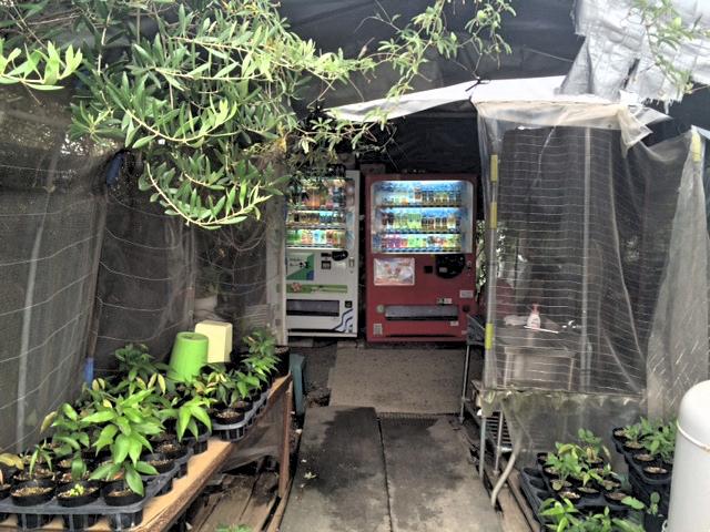 香川県善通寺市の岸井うどんの店舗はビニールハウス